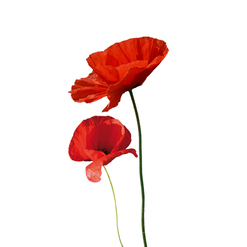 Coquelicot png